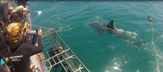 Shark Cage Diving Dec 12